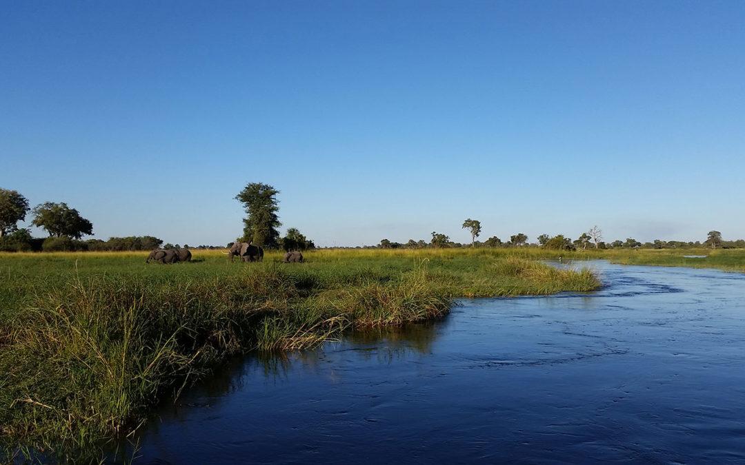 A breathtaking safari in green Botswana